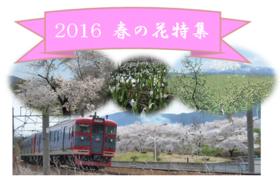 2016 春の花特集