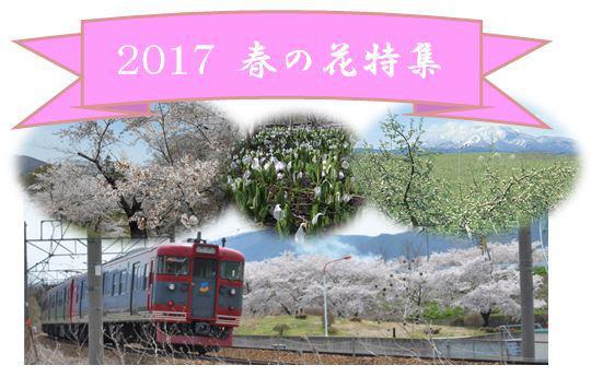 2017 春の花特集
