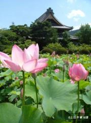 蓮のフェスタ in 信濃国分寺