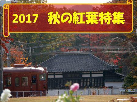 2017 秋の紅葉特集