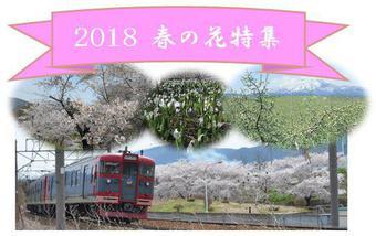 2018 春の花特集