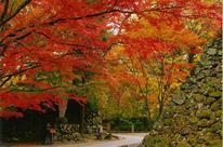 小諸城址懐古園紅葉まつり
