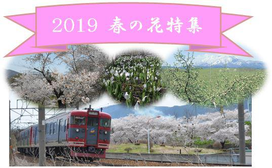 2019 春の花特集